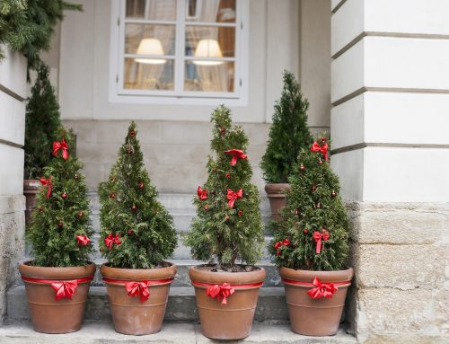 Garden Tips for the Holiday Season