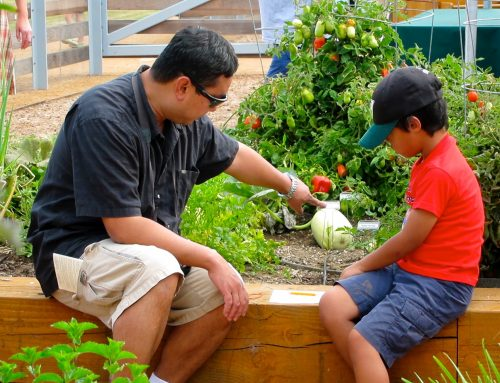 Farm + Food Lab and Solutions for Urban Agriculture Come Together