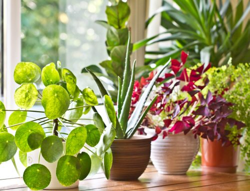 These Houseplants Don't Require a Green Thumb to Grow