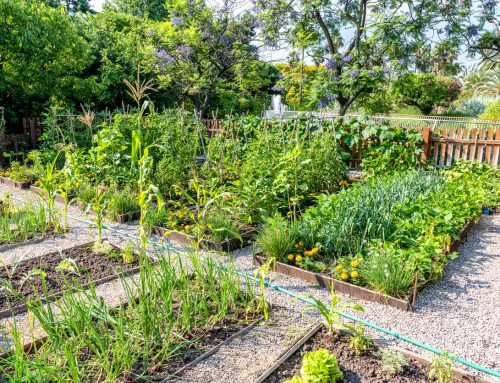 How To Avoid 5 Common Garden Mistakes